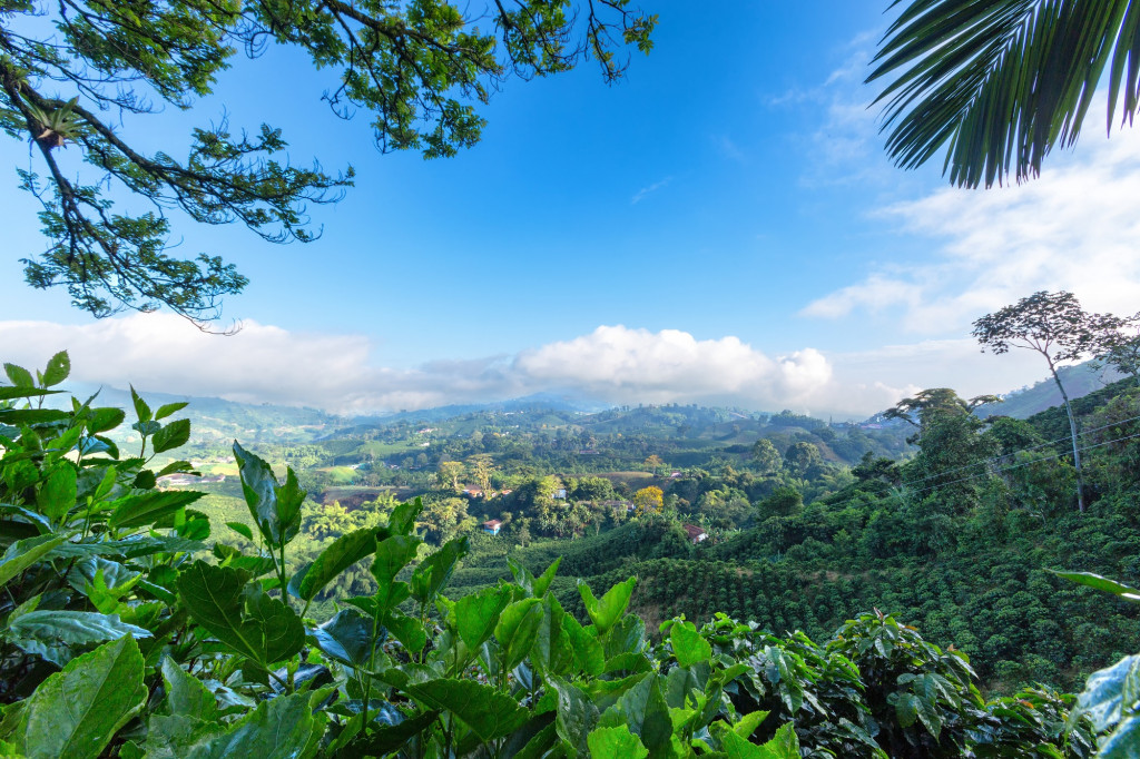 Immersion dans les plantations de café, Colombie
